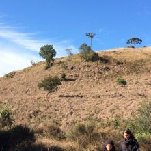 Campos na Trilha dos Xaxins Gigantes